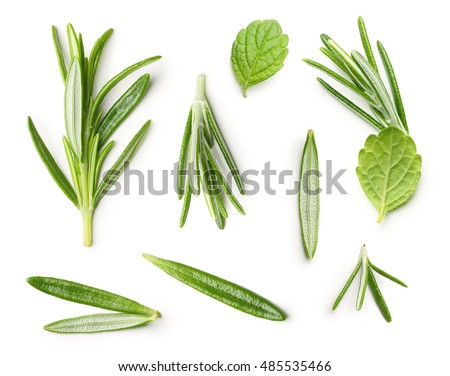 Rosemary twig and mint isolated on a white background