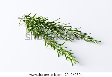 Rosemary twig isolated #704262304