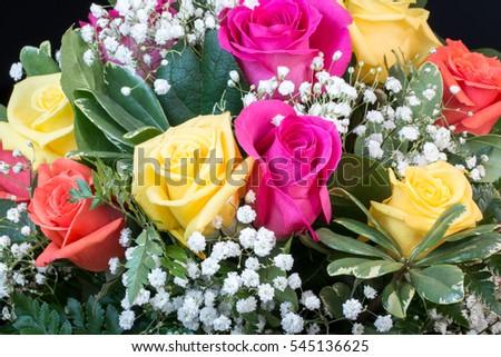 Roses #545136625