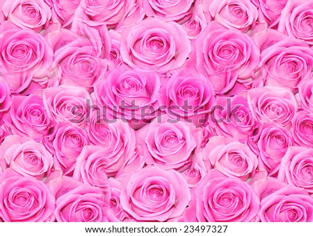 flowers roses background. stock photo : Roses background