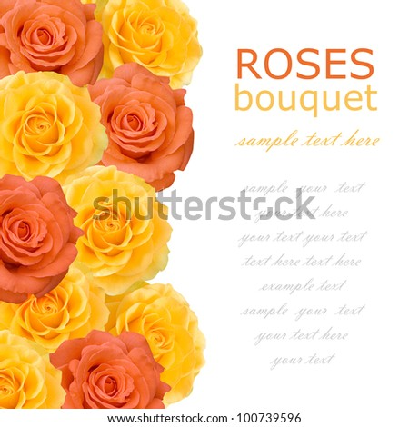 Roses bouquet background isolated on white with sample text