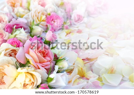 Roses flowers and petals background.