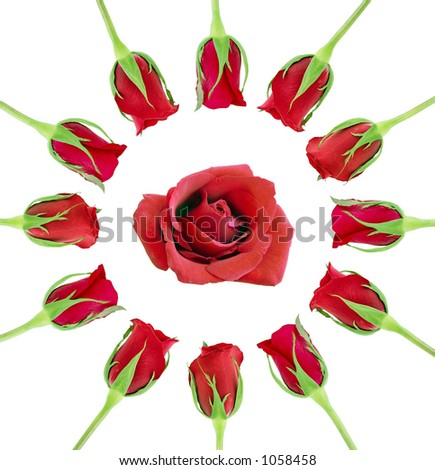 Roses in a round shape against white background