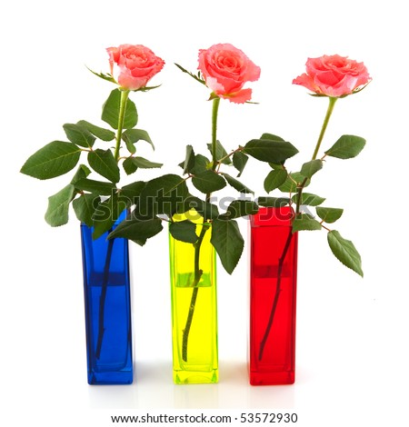 Roses in colorful vases isolated over white