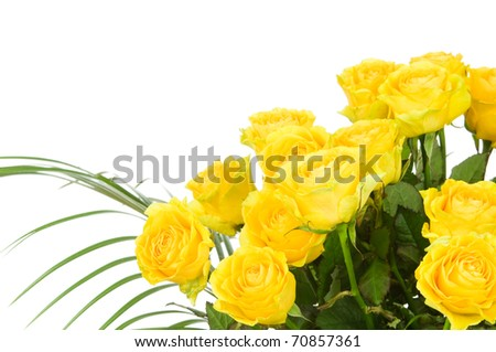Roses isolated on white background - stock photo