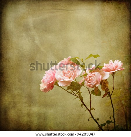 roses on a vintage background texture