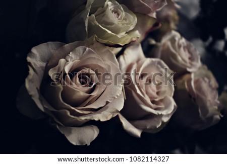 roses on dark background #1082114327