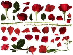 Roses set with isolated white background