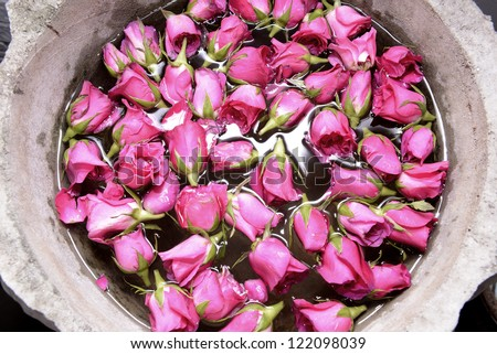 Roses with water - stock photo