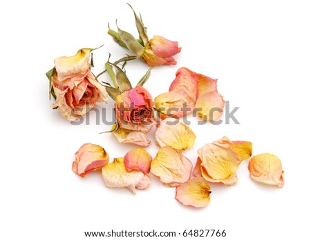 Roses with withered background
