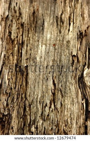 ROTTED TIMBER BOARD