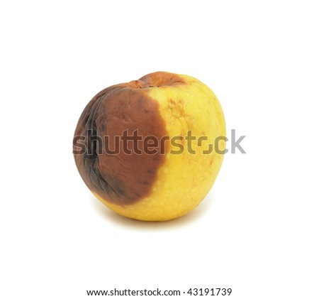 Rotten apple, isolated on a white background - stock photo
