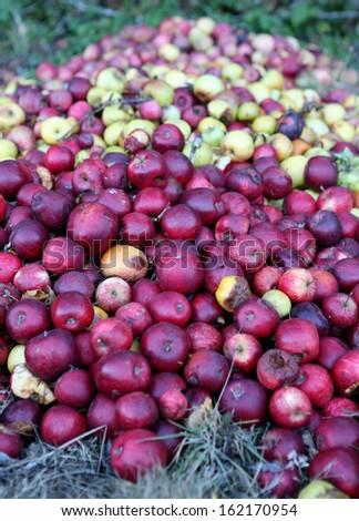Rotten apples.