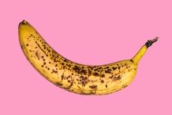Rotten banana isolated on pink background. Expired fruit.