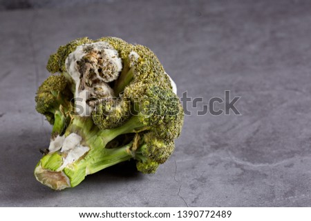 Rotten broccoli with toxic mold lying on a dark background . Horizontally. Copy space.  #1390772489
