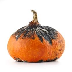 Rotten hokkaido pumpkin isolated on white background