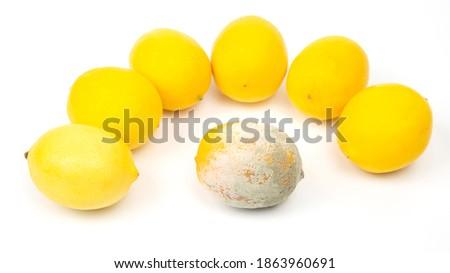 Rotten lemon next to fresh lemons on a white background Foto stock ©