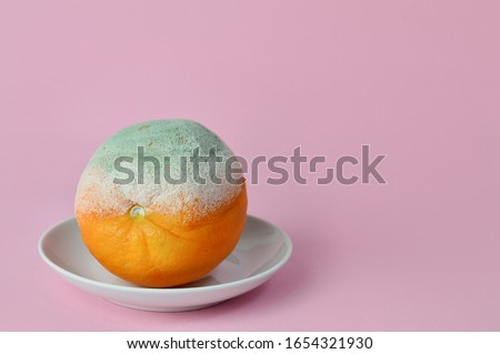 rotten orange. Rotten moldy orange in a plate on pink background. A photo of the growing mold. Food contamination, bad spoiled disgusting rotten fruit. food leftovers.Copy space. Stok fotoğraf ©
