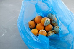 Rotten spoiled tangerine or mandarin fruits in plastic bag. Ugly moldy fruit. Improper food storage. Concept - reduction of organic waste.