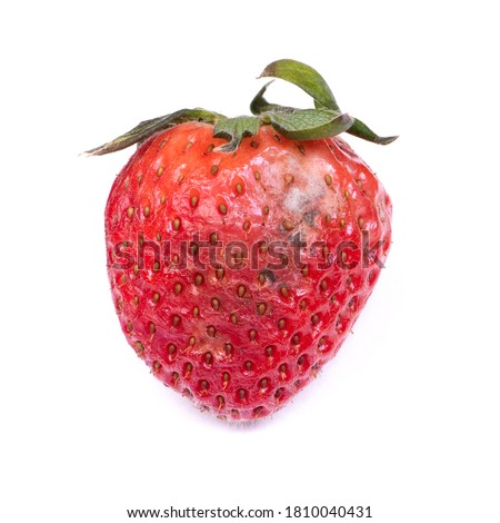 Rotten strawberry isolated on white background Foto stock ©