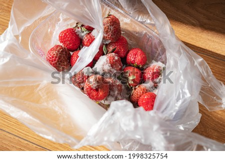 Rotten strawberry with white large mold in plastic bag. Spoiled food due to improper storage. Photo stock ©