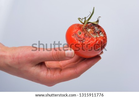 Rotten tomato in hand. Mold on vegetables. Rotten product. Spoiled food. Rotten vegetable. Tomato with mold. Mold fungus. Broken the surface of the tomato. A product that has been affected by mold.