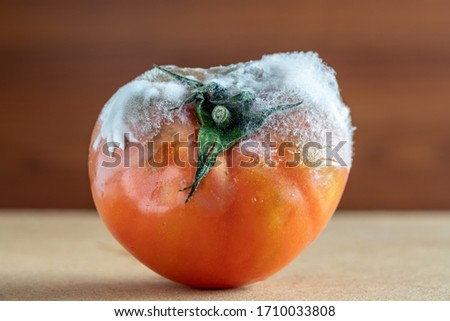Rotten tomato with mold and fungi closeup on a dark background. Foto stock ©