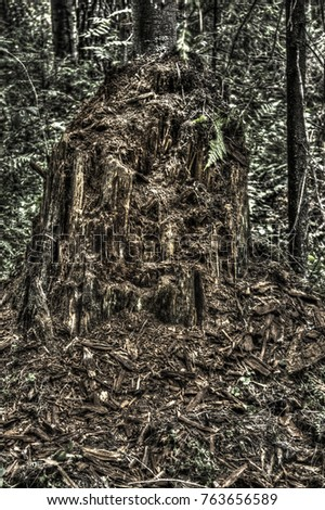 Rotten tree stomp