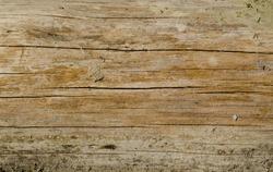 Rotten wood close up and its rotten splinters