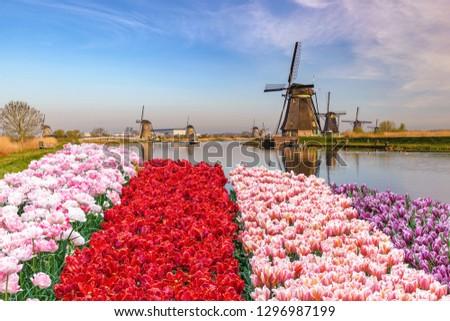 Rotterdam Netherlands, Dutch Windmill at Kinderdijk Village with tulip field Stockfoto ©
