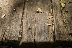 Rotting Planks