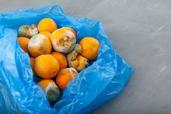 Rotting tangerines in blue plastic bag on grey background.  Improper food storage. Concept - reduction of organic waste.