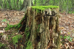 rotting tree trunk in forest