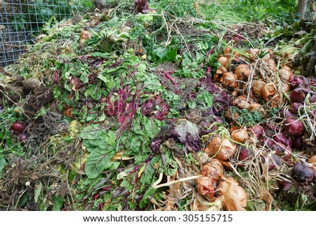 Rotting vegetables on the gardeners compost heap.