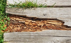 Rotting wood on boardwalk path