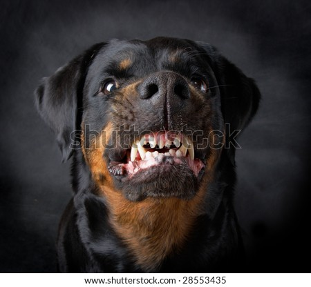 Rottweiler the girl of 6 years on a black background