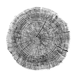 Rough aged cracked wood textured tree rings. Black and white cut tree log slice isolated on white showing age and years