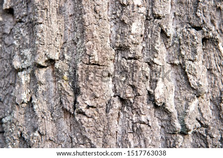 Rough and dry. Tree trunk. Tree bark texture. Tree stem cover closeup. Mature tree covered with moss. Woody plant. Forest nature. Natural background. #1517763038
