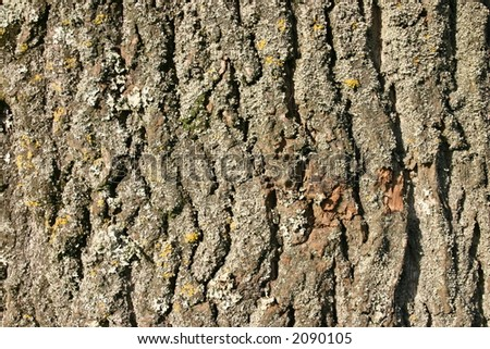 Rough bark background #2090105