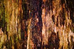 Rough blotchy tree bark texture and pattern