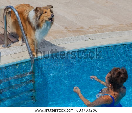 Rough collie dog watching young girl in swimming pool #603733286