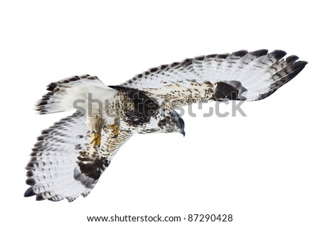 Rough Legged Hawk Saskatchewan Canada against sky