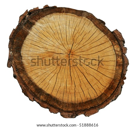 stock-photo-rough-pine-circle-cut-isolated-on-white-background-51888616.jpg
