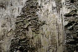 Rough rough uneven natural texture of tree bark, birch, macro