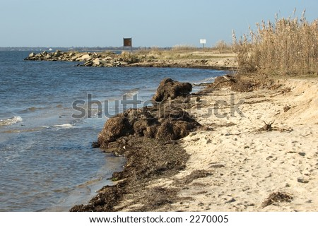 Rough, seaweed covered beaches common to New England area. This is a coastline on the Great South Bay of Long Island, NY.