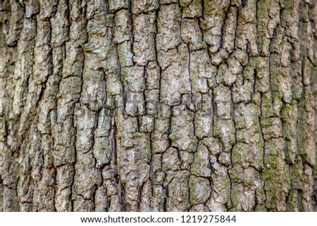 Rough texture of the bark of an old tree, preform for design
