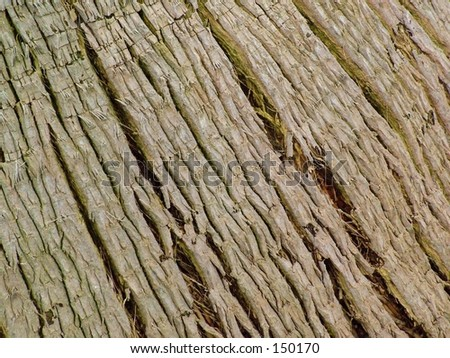 Rough tree bark close up background