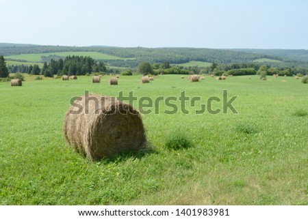 Round bale of hay in a green field. Many more bales in the distance, Hazy, slightly overcast day. #1401983981