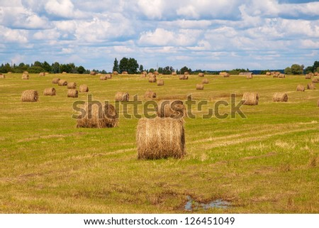 Round bale of straw in the meadow