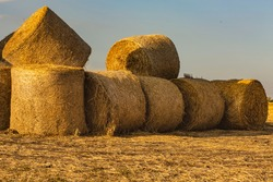 Round bales of hay lie and sit on other bales in a field of mown wheat against the sky. Rolls of golden straw on a wheat field at sunset in Italian. Hay packaging and storage technology in agriculture